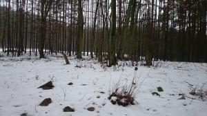 Cisowy stary cmentarz 4